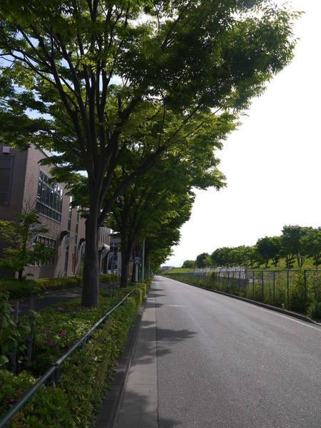 0837_尾根幹道路2.JPG