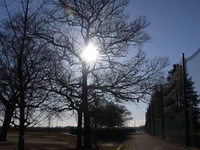 0842_アラサイ左岸の冬枯れの木.JPG