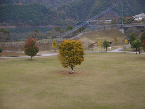 0844_宮が瀬公園紅葉1.JPG