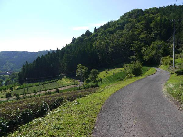 0847_里山の虫沢.JPG
