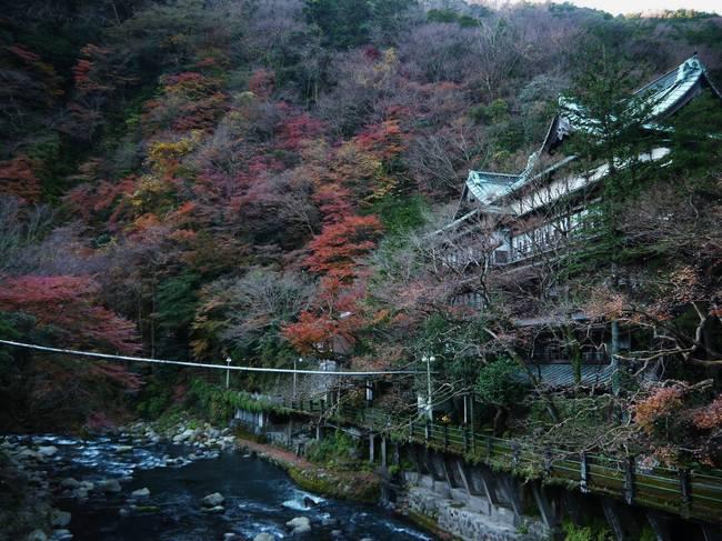 0904_Japanese Beautyの紅葉.JPG