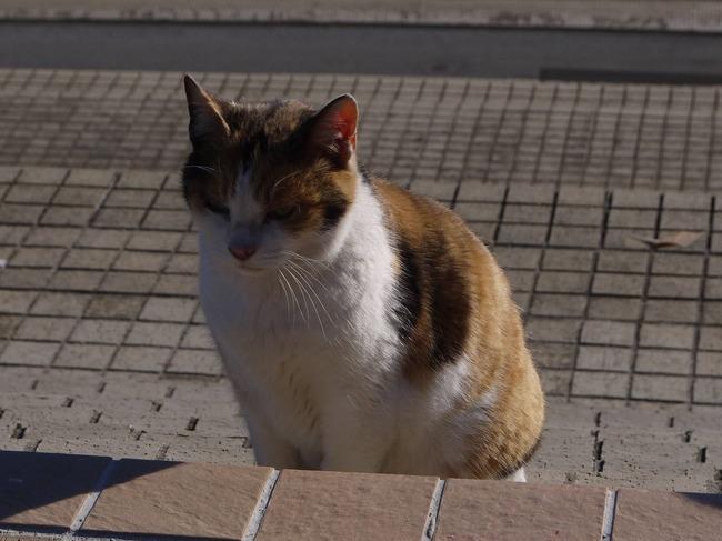 0909_中央公園のノラ猫_S.JPG
