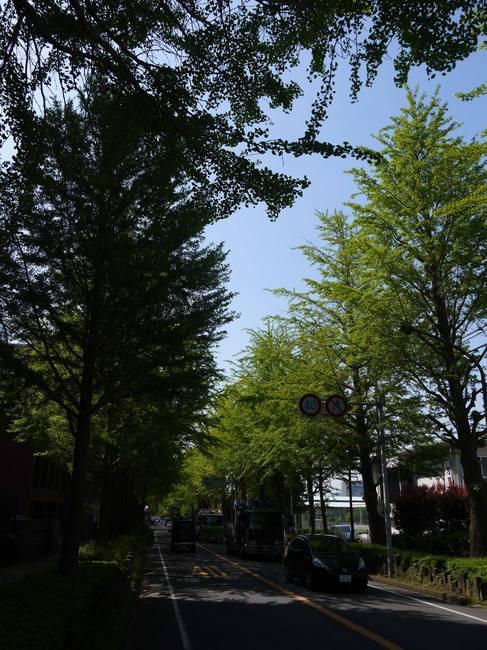 0914_三島の鮮やかな新緑.JPG