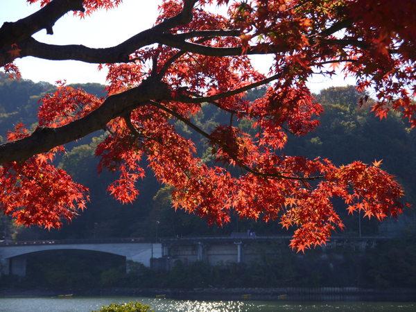 0917_紅葉の相模湖2.JPG