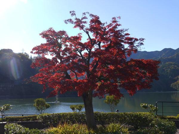 0918_相模湖紅葉2.JPG