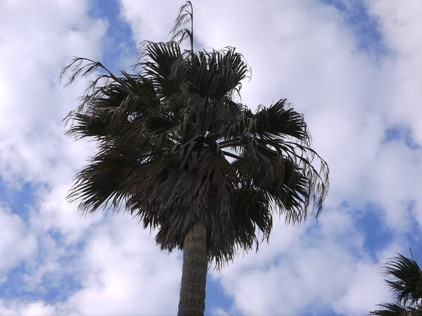 0920_椰子の木.JPG