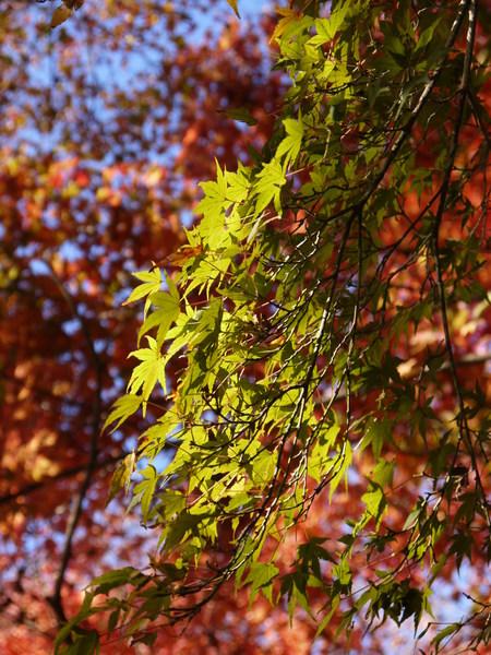 0923_緑と赤のバランス.JPG