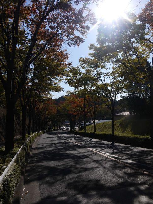 0937_紅葉の美山通り.JPG