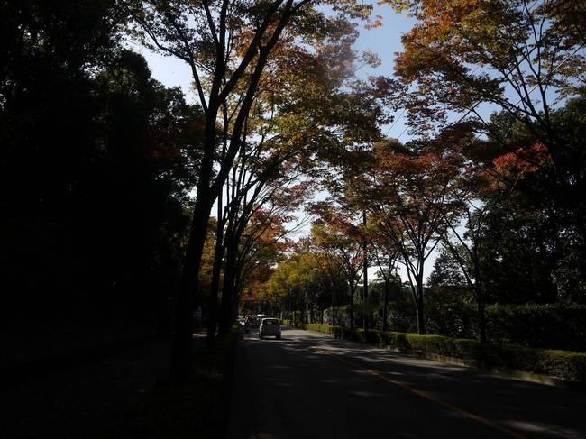 0940_紅葉の車道.JPG