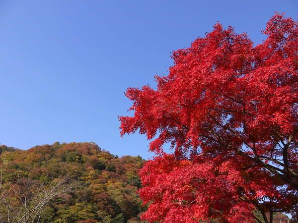 0950_宿紅葉.JPG