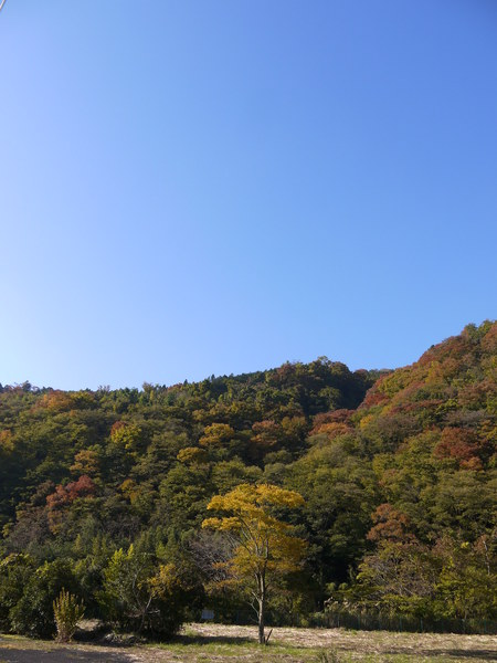 1000_宿木紅葉2.JPG