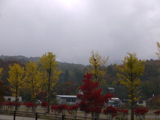 1003_山中湖の銀杏.JPG