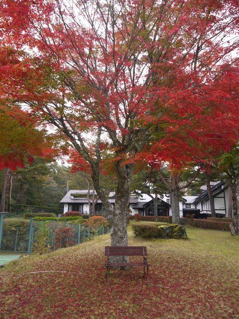 1009_紅葉のベンチ.JPG