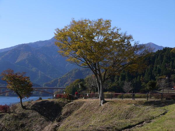 1016_宮が瀬湖紅葉2.JPG