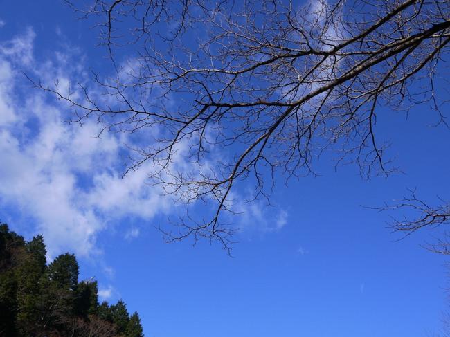 1034_青い空.JPG