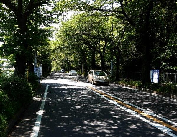 1038_霧が丘新緑.JPG