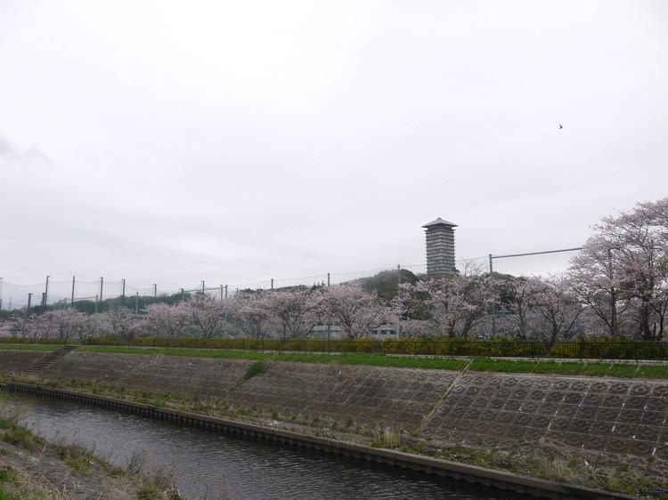 1059_境川の芝桜へ.JPG