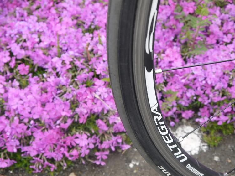 1103_目当ての芝桜.JPG