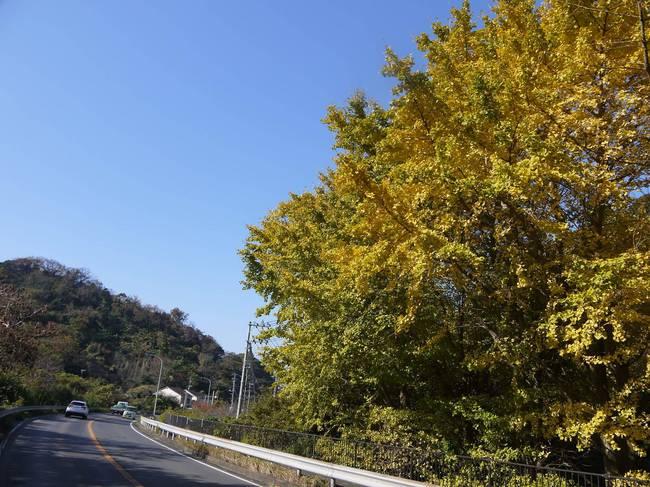 1109_国道127号の紅葉.JPG