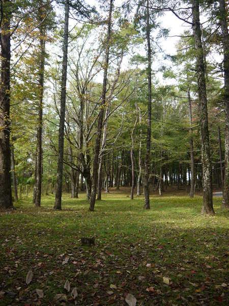 1130_高原の林の佇まい.JPG
