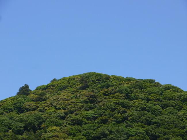 1223_若葉と青い空.JPG