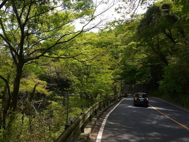 1228_箱根の新緑.JPG