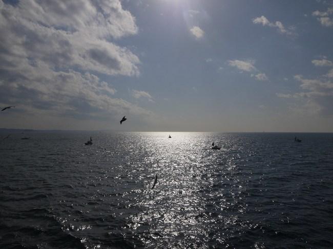 1236_東京湾とウミネコ.JPG
