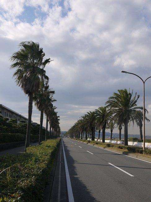 1348_馬堀海岸。強風に苦しむ.JPG