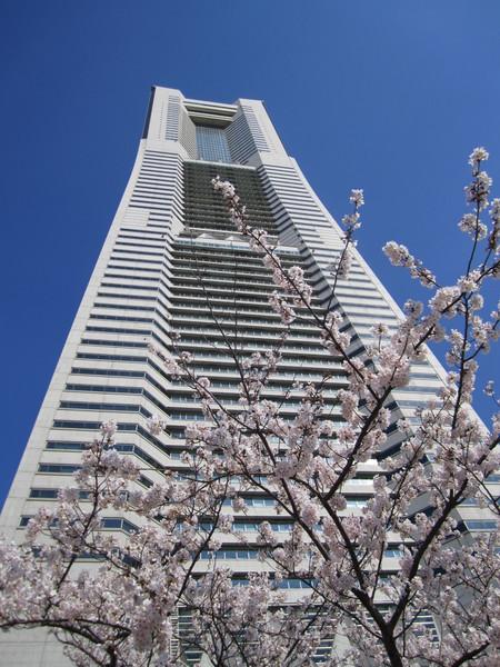 ランドマークと満開の桜.JPG