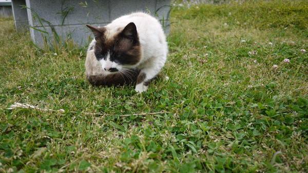 城ヶ島公園猫.JPG