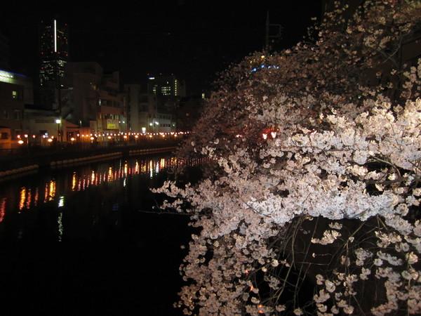 大岡川の夜桜.JPG