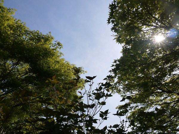宮が瀬の木.JPG