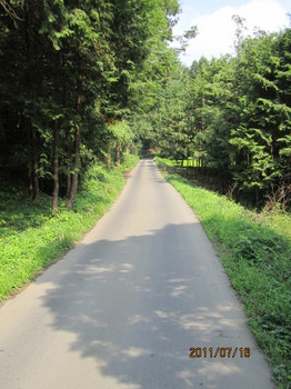 帰路森の道.JPG