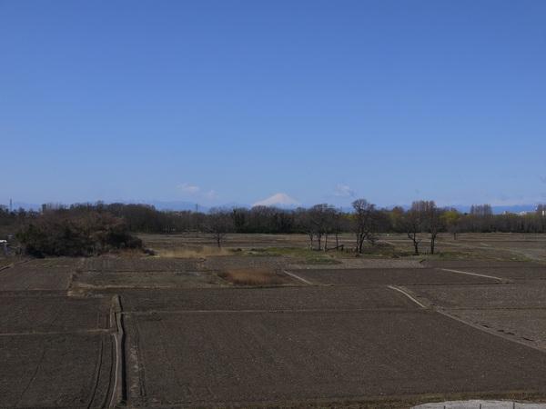 強風の荒川CRと富士.JPG