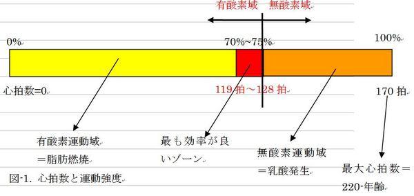 心拍数と有酸素運動.JPG