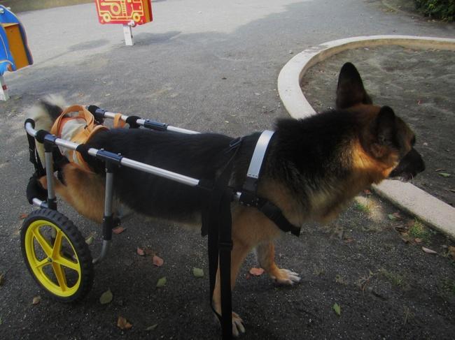 愛犬と散歩-1.JPG
