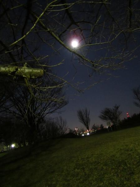 月の公園.JPG