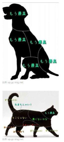 猫と犬の違い2.JPG