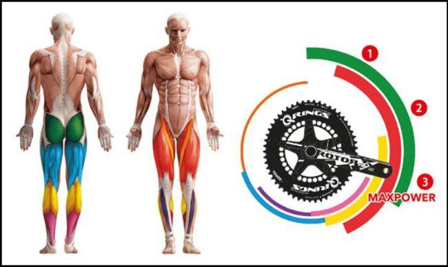筋肉とペダル位置関係.JPG