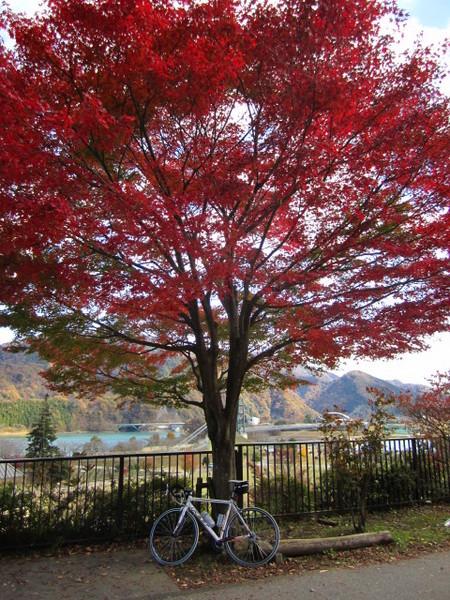 紅葉とロードバイク.JPG