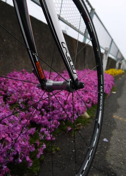 芝桜とF-85.JPG