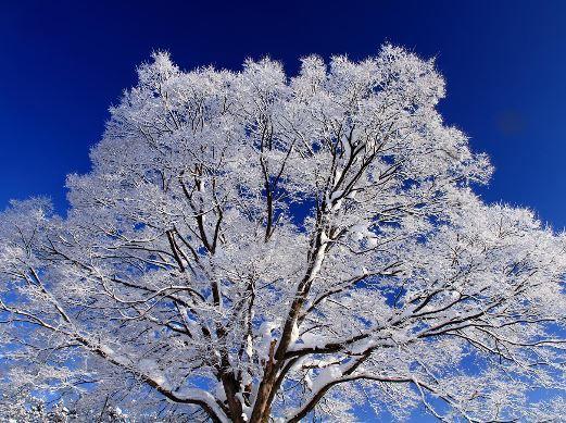 雪の華画像.JPG